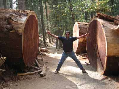 Early days: In the Grove of Giants. At the Mariposa Grove in Yosemite.